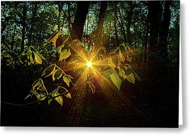 The Forest Through The Trees Greeting Card by Phil Koch
