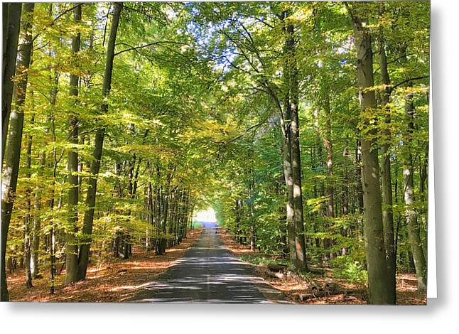 Greeting Card featuring the photograph Road In The Forrest In Austria by Chris Feichtner