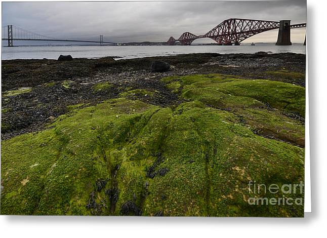 The Forth Bridges Greeting Card by Nichola Denny