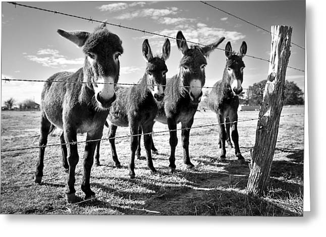 Greeting Card featuring the photograph The Four Amigos by Sharon Jones