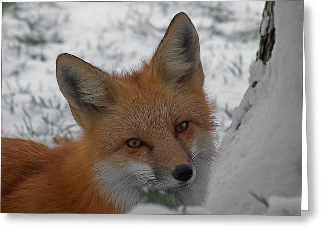 The Fox 4 Greeting Card by Ernie Echols