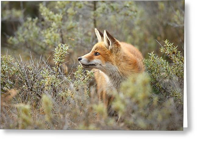 The Fox And Its Prey Greeting Card