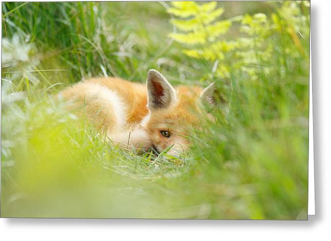 The Fox Kit And The Ferns Greeting Card