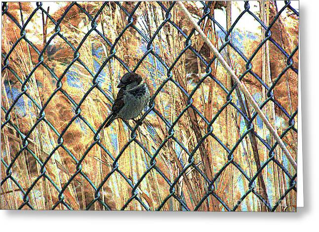 The Free Sparrow Greeting Card by Jennifer Allen