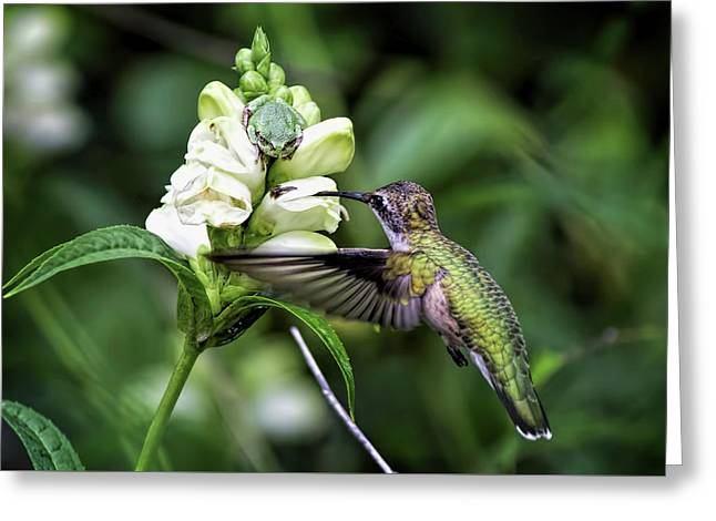 The Frog And The Hummingbird Greeting Card