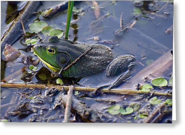 The Frog Remains Greeting Card