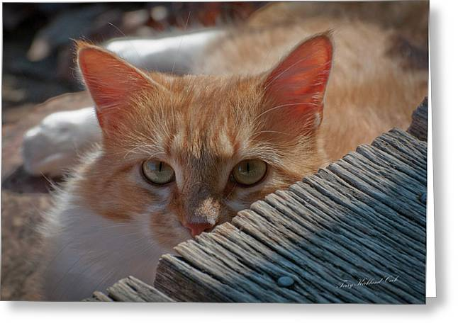 Tom Cat Greeting Cards - The Front Porch Greeting Card by Terry Kirkland Cook