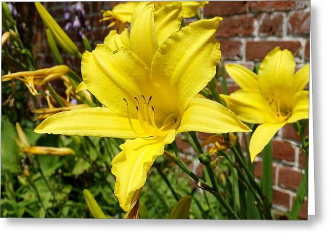 The Garden Yellow Lily Greeting Card by Mike McGlothlen