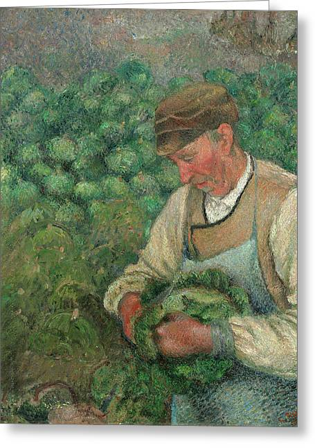 The Gardener - Old Peasant With Cabbage Greeting Card by Camille Pissarro