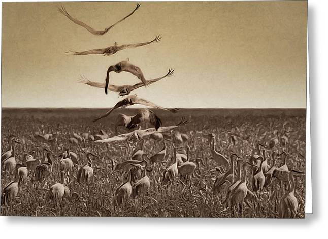 The Gathering - Sandhill Cranes Greeting Card by Nikolyn McDonald