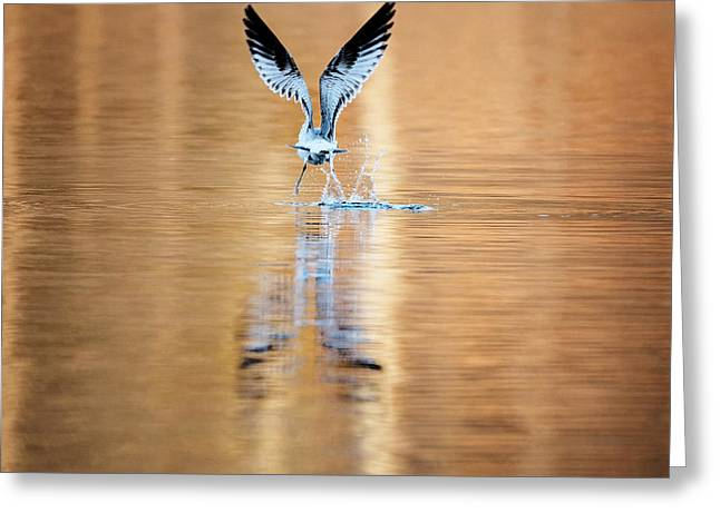 The Gift Of Flight Square Greeting Card