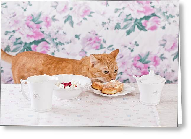 The Ginger Cat Eats Breakfast. Cookies, Cottage Cheese And Milk. Country Breakfast On The Table. Cat Thief. Greeting Card by Oksana Ariksina