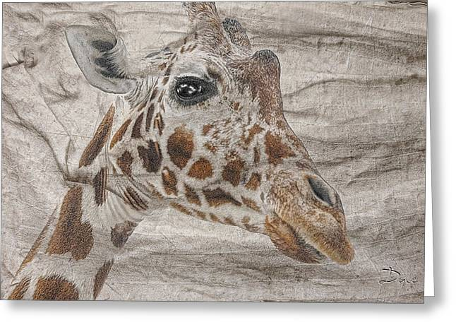 Greeting Card featuring the photograph The Giraffe  by Dyle   Warren