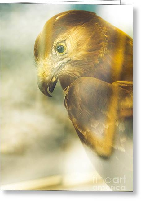 The Glass Case Eagle Greeting Card by Jorgo Photography - Wall Art Gallery