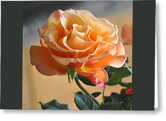 The Glorious Rose Greeting Card by Jay Milo