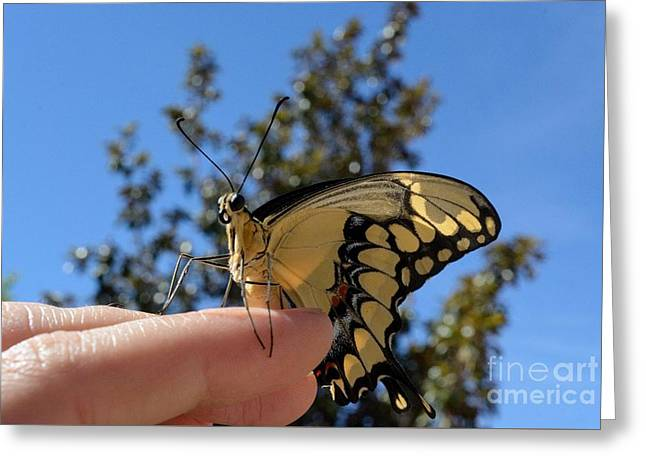 The Glorious Swallowtail  Greeting Card