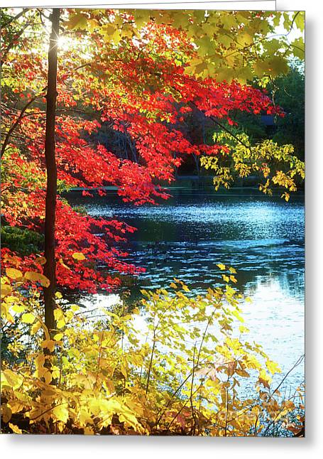 The Glory Of A New England Autumn Greeting Card