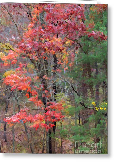 The Glory Of Fall Greeting Card by Roberta Byram