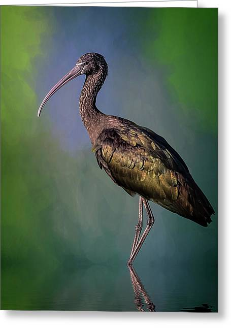 The Glossy Ibis Stroll Greeting Card