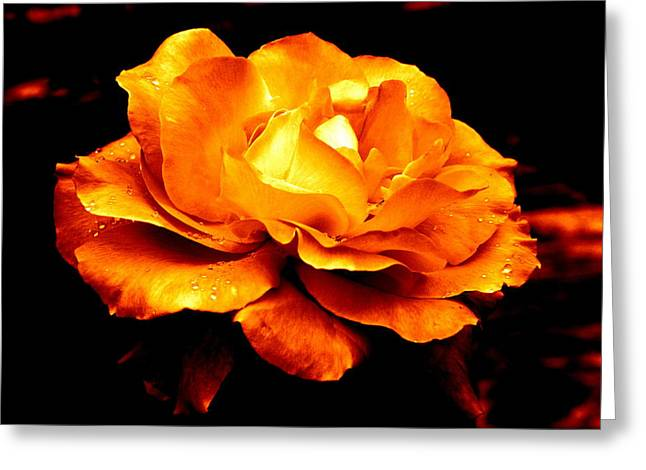 The Glow Of Amber.... Greeting Card
