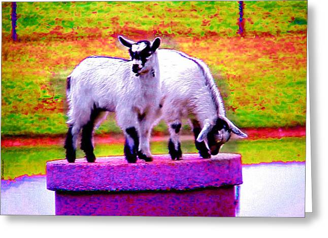 The Goats Greeting Card by Tim Mattox