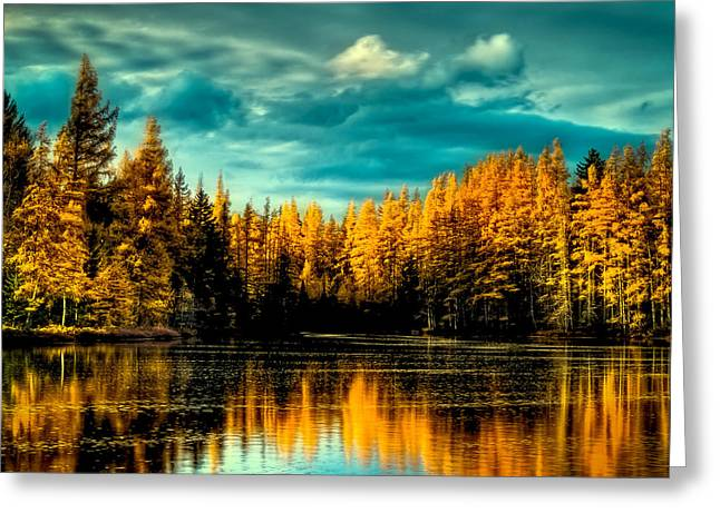 The Golden Forest Greeting Card by David Patterson