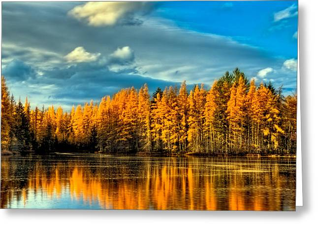 The Golden Forest In The Adirondacks Greeting Card by David Patterson