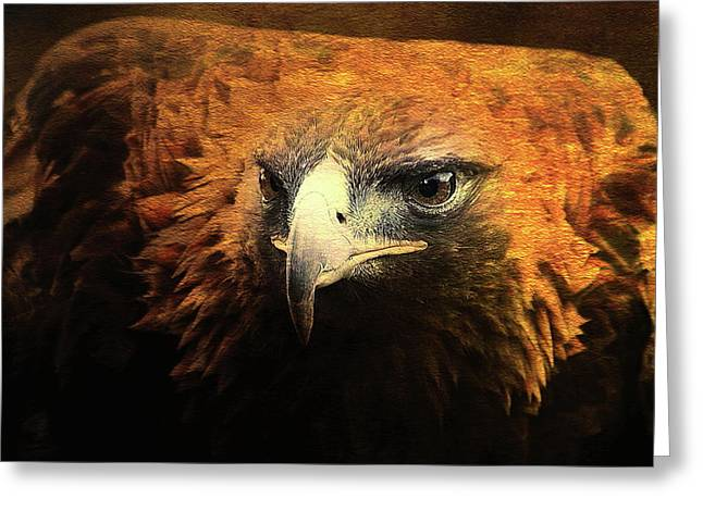 Red Tail Hawk Digital Art Greeting Cards - The Golden Hawk Locks On Target . Square . R3593 Greeting Card by Wingsdomain Art and Photography