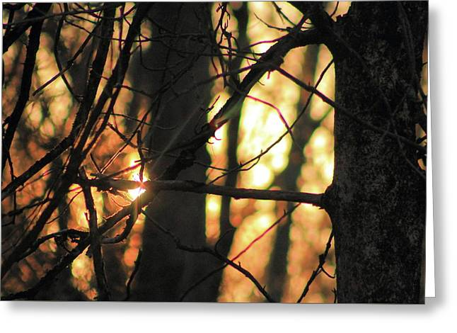 Greeting Card featuring the photograph The Golden Hour by Bruce Patrick Smith