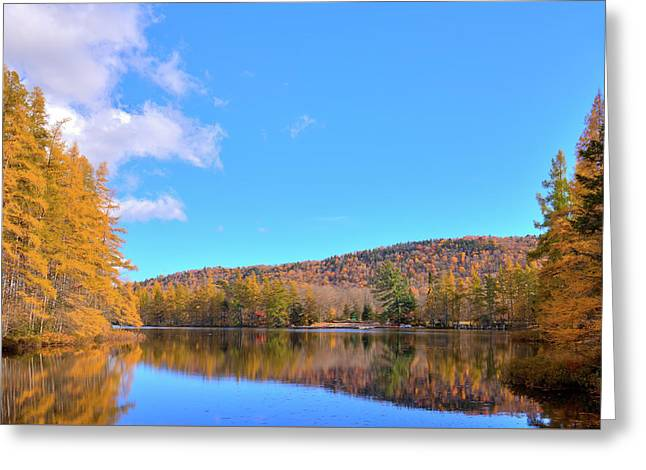 Greeting Card featuring the photograph The Golden Tamaracks Of Woodcraft Camp by David Patterson