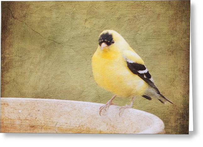 The Goldfinch Painting Effect Greeting Card by Heidi Hermes