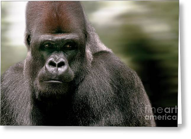 Greeting Card featuring the photograph The Gorilla by Christine Sponchia