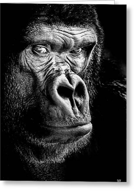 The Gorilla Large Canvas Art, Canvas Print, Large Art, Large Wall Decor, Home Decor Greeting Card by David Millenheft