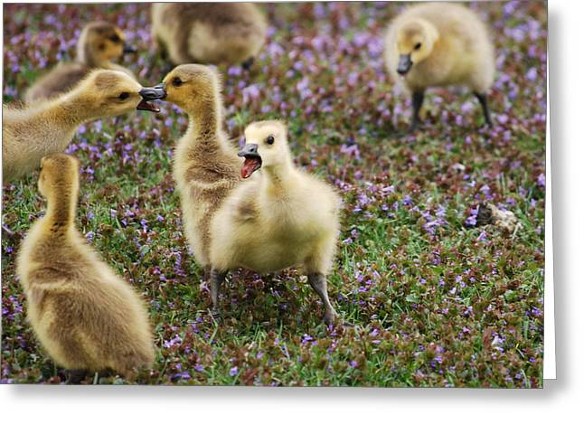 The Gosling Series - Mom - They're Fighting Again Greeting Card by Michelle  BarlondSmith