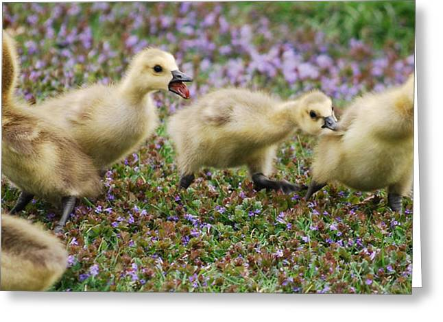 The Gosling Series - No - It's Mine Greeting Card by Michelle  BarlondSmith