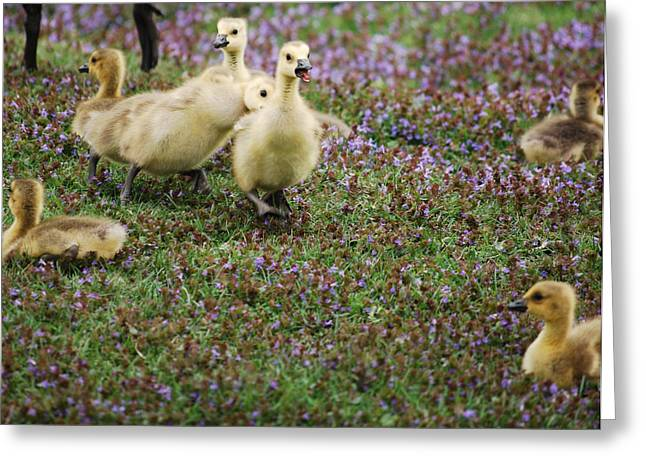 The Gosling Series - Tag - You're It Greeting Card by Michelle  BarlondSmith