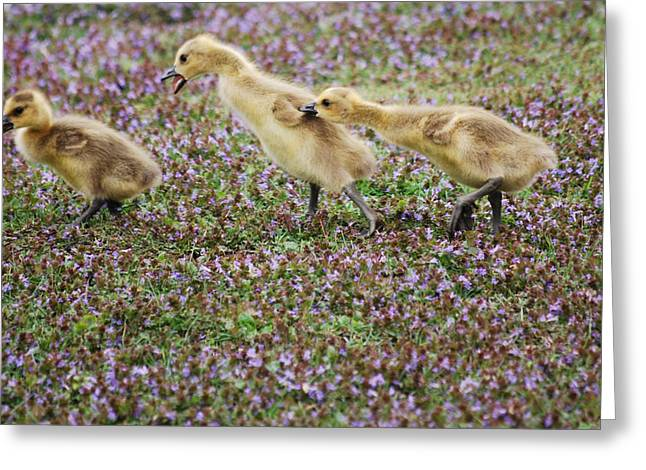 The Gosling Series - You're Gonna Get It Greeting Card by Michelle  BarlondSmith