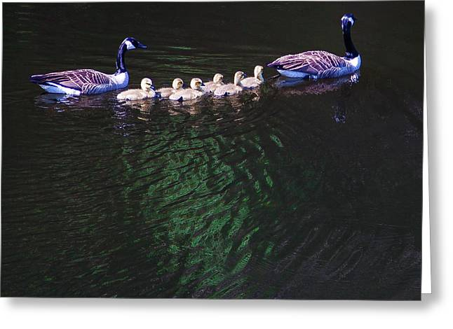 The Goslings On The River Greeting Card by David Patterson