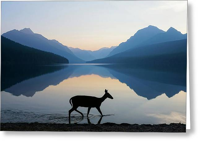 The Grace Of Wild Things Greeting Card by Dustin  LeFevre