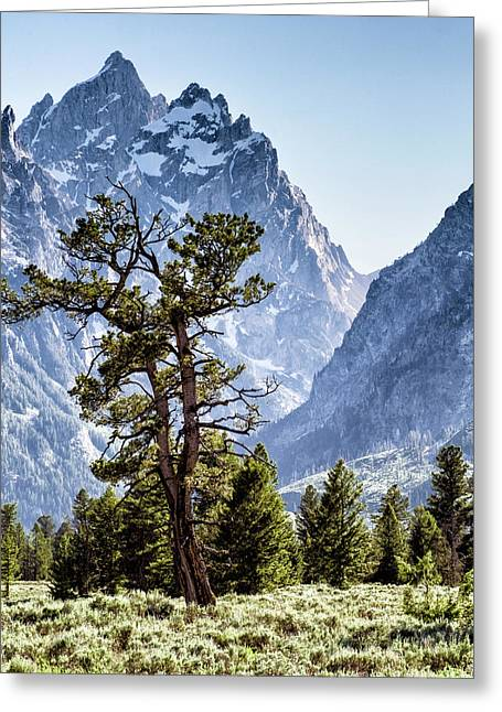 The Grand Teton With Pine And Sage Greeting Card