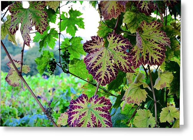 Greeting Card featuring the photograph The Grape Vine by Corinne Rhode