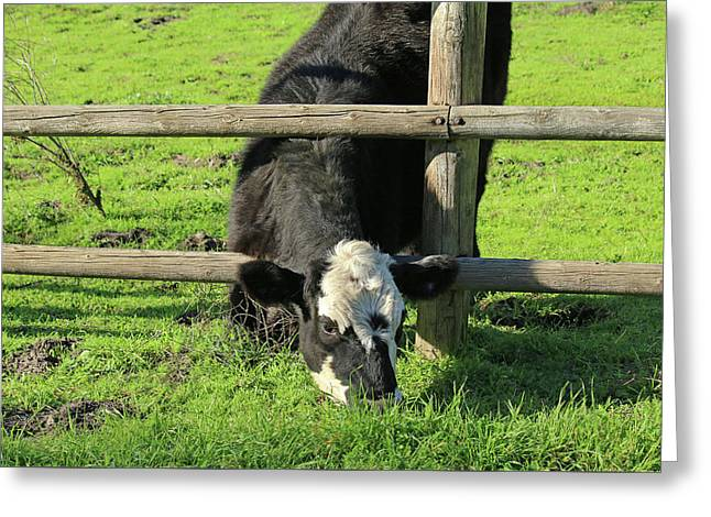 Greeting Card featuring the photograph The Grass Is Always Greener by Art Block Collections