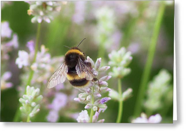The Great British Bee Greeting Card