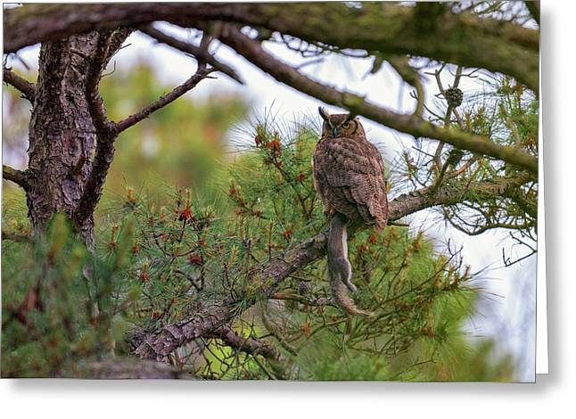 The Great Horned Owl And His Prey Greeting Card