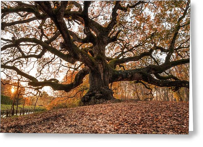 The Great Oak Greeting Card