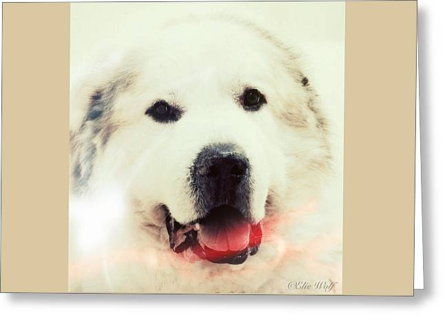 The Great Pyrenean Greeting Card