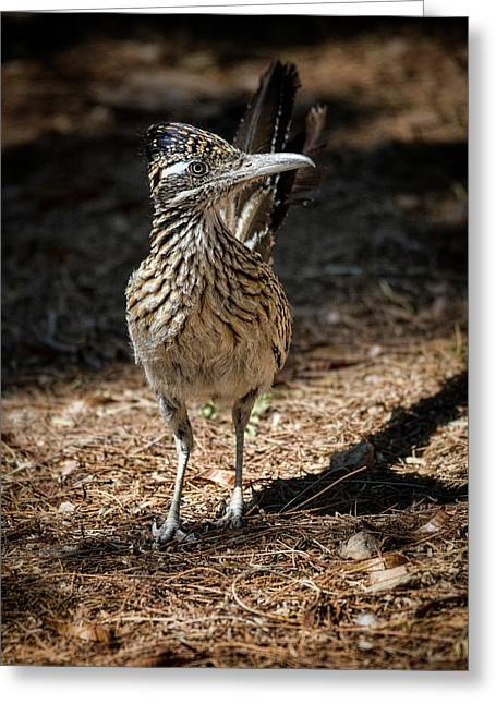 The Greater Roadrunner Walk  Greeting Card by Saija Lehtonen