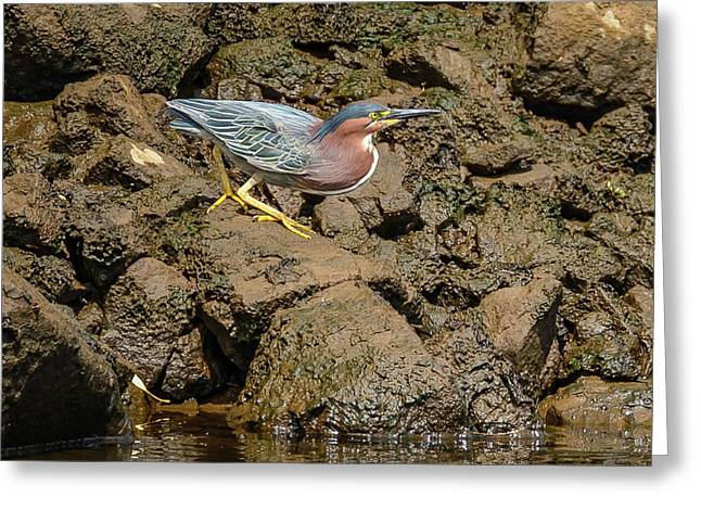 The Green Heron Greeting Card