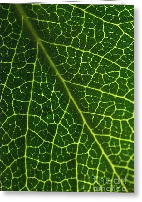 The Green Network Greeting Card by Ana V Ramirez