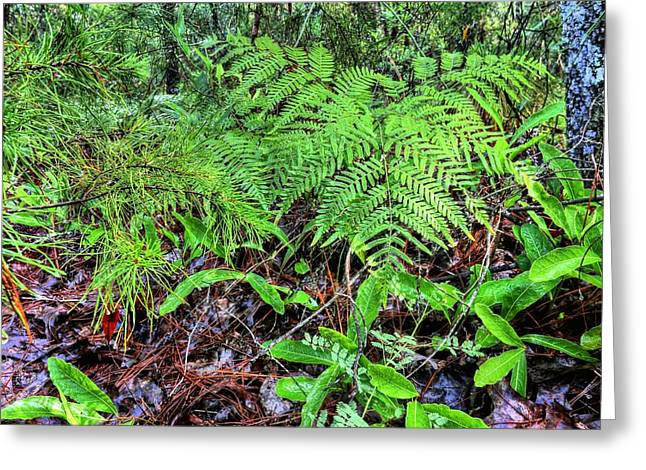 The Green Of The Forest Floor Greeting Card by JC Findley